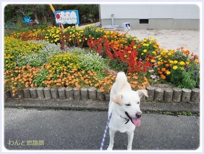 f:id:yasukazu01:20140905205259j:image