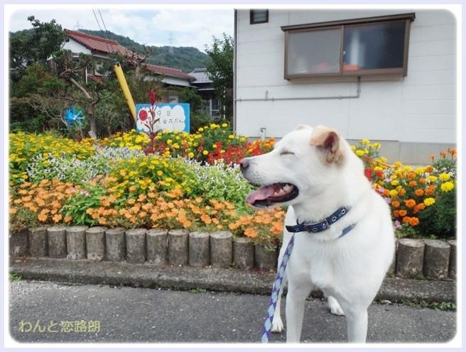 f:id:yasukazu01:20140905205321j:image