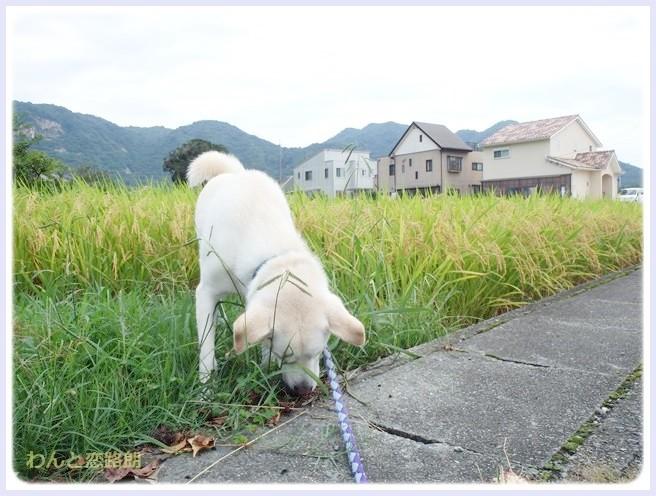 f:id:yasukazu01:20140905205509j:image
