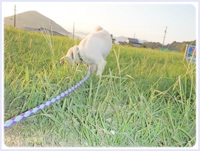 f:id:yasukazu01:20140905212658j:image
