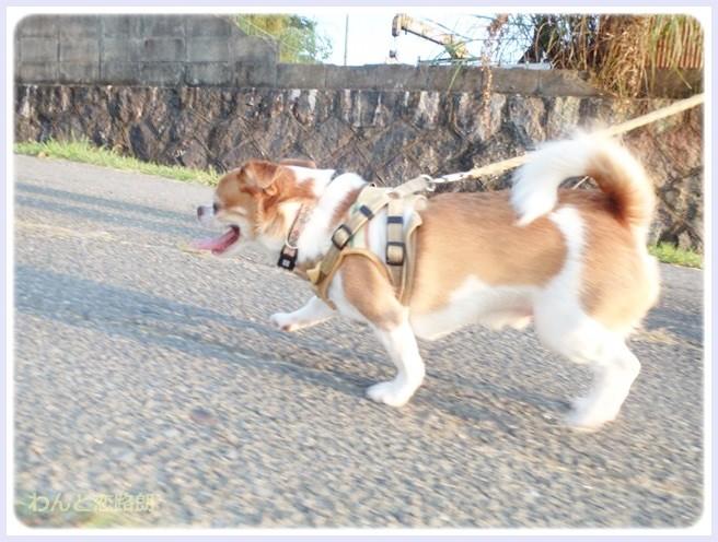 f:id:yasukazu01:20140905213242j:image
