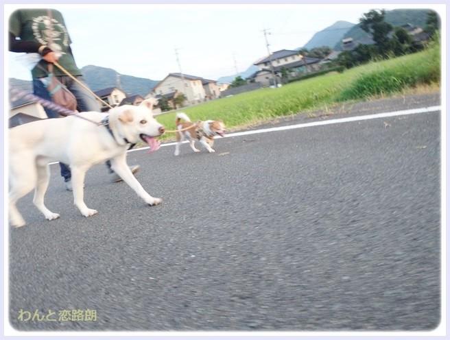 f:id:yasukazu01:20140905213557j:image