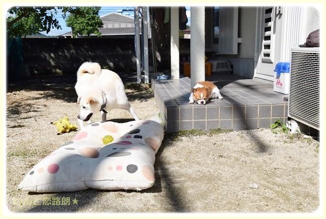 f:id:yasukazu01:20140907212437j:image