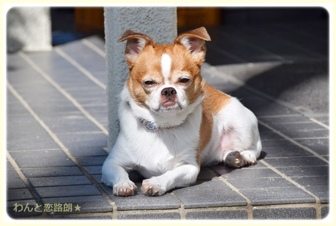 f:id:yasukazu01:20140907212621j:image