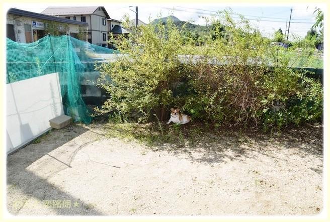 f:id:yasukazu01:20140908220406j:image