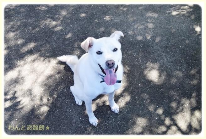 f:id:yasukazu01:20140908221832j:image