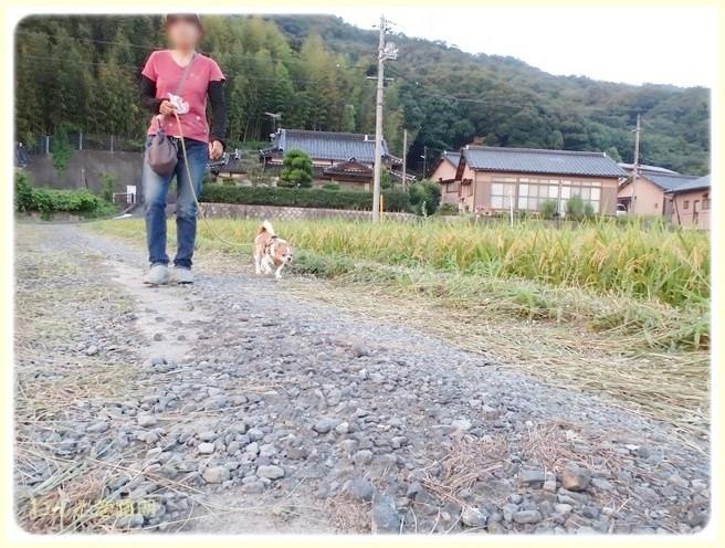 f:id:yasukazu01:20140910210451j:image