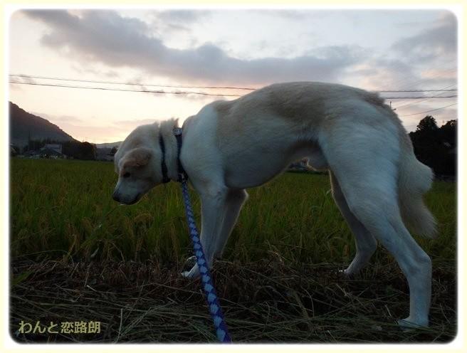 f:id:yasukazu01:20140910210538j:image
