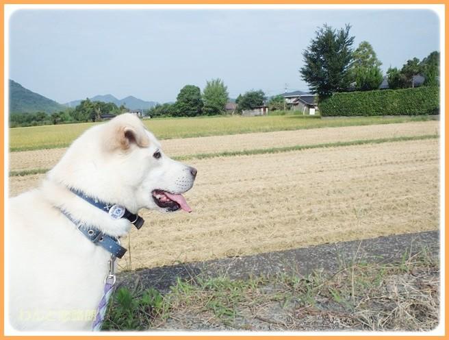 f:id:yasukazu01:20140911202548j:image