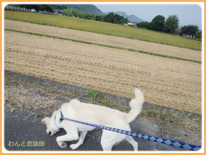 f:id:yasukazu01:20140911202709j:image