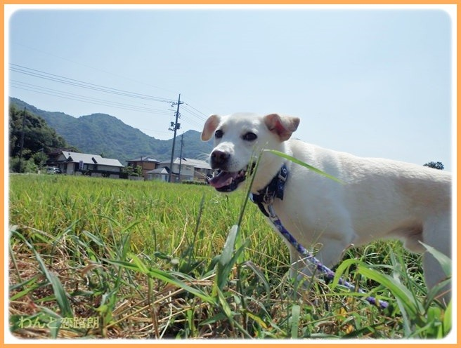 f:id:yasukazu01:20140912222620j:image