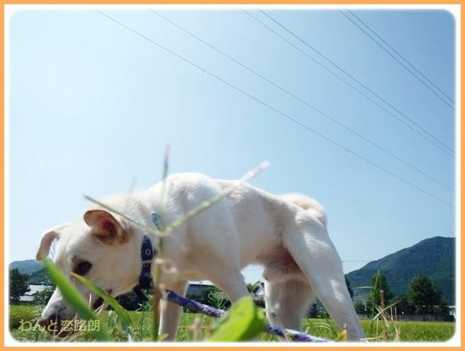 f:id:yasukazu01:20140912222919j:image