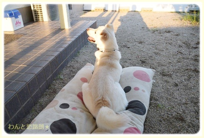 f:id:yasukazu01:20140912224057j:image
