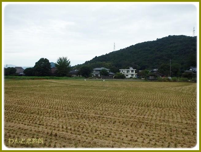 f:id:yasukazu01:20140920205018j:image