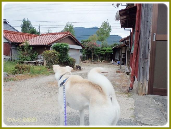 f:id:yasukazu01:20140920205144j:image
