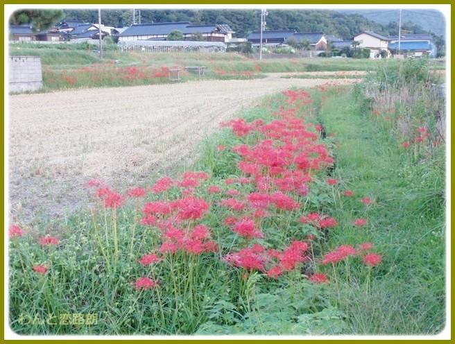 f:id:yasukazu01:20140920205315j:image