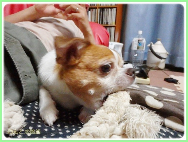 f:id:yasukazu01:20140921222648j:image