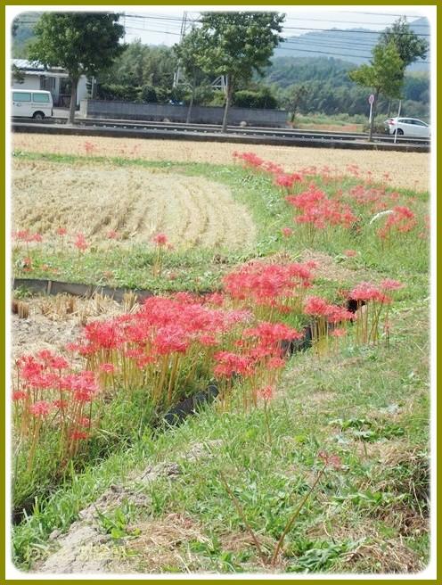 f:id:yasukazu01:20140922220528j:image