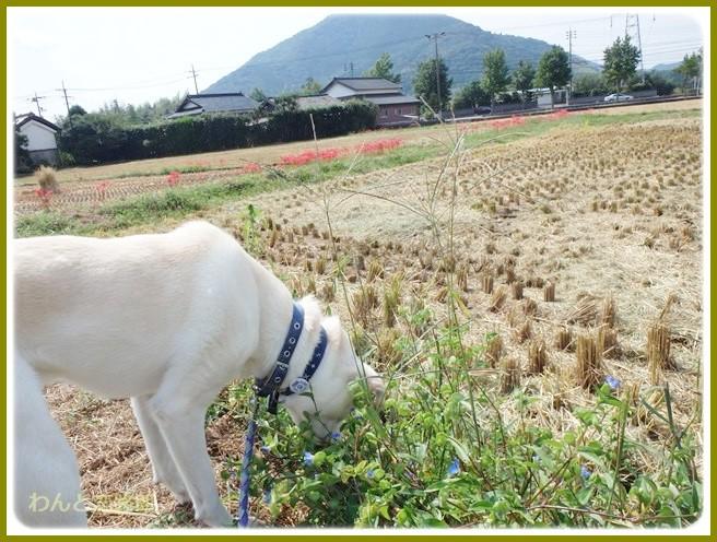 f:id:yasukazu01:20140922220628j:image