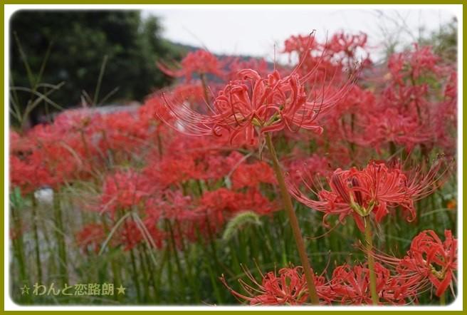 f:id:yasukazu01:20140923212203j:image