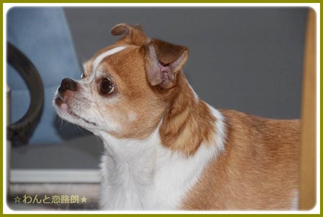 f:id:yasukazu01:20140923214318j:image