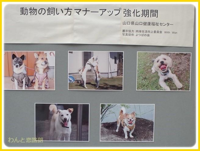 f:id:yasukazu01:20140927210749j:image