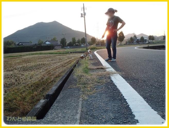 f:id:yasukazu01:20140927211451j:image