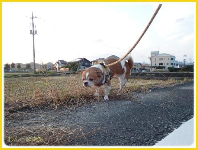 f:id:yasukazu01:20140927211601j:image