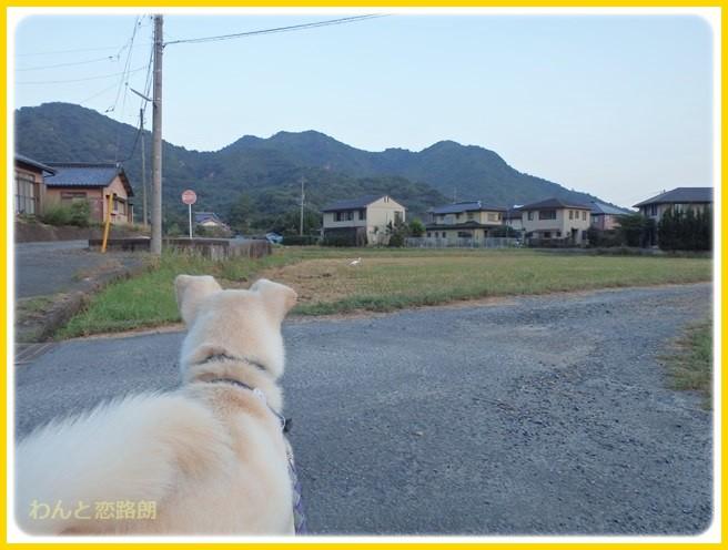 f:id:yasukazu01:20140927211653j:image