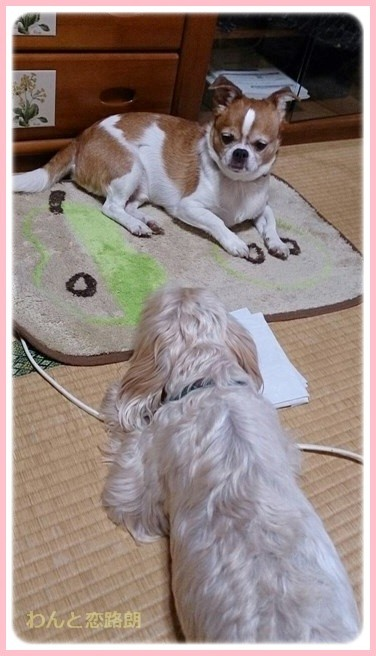 f:id:yasukazu01:20141007223327j:image