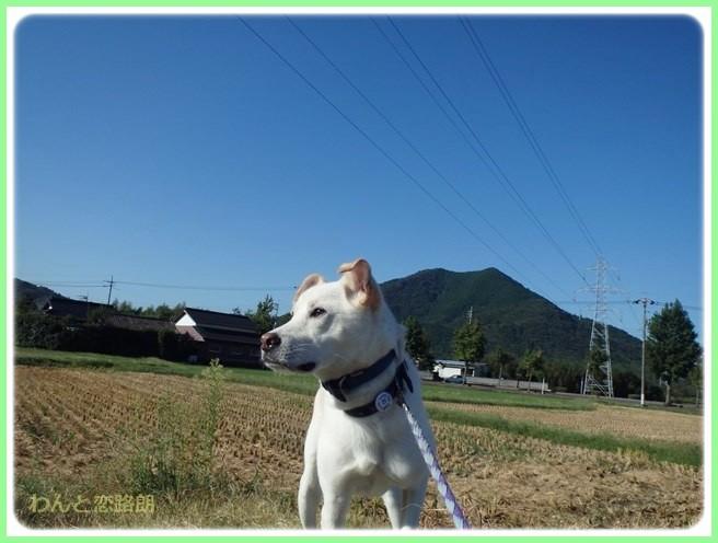f:id:yasukazu01:20141009222232j:image