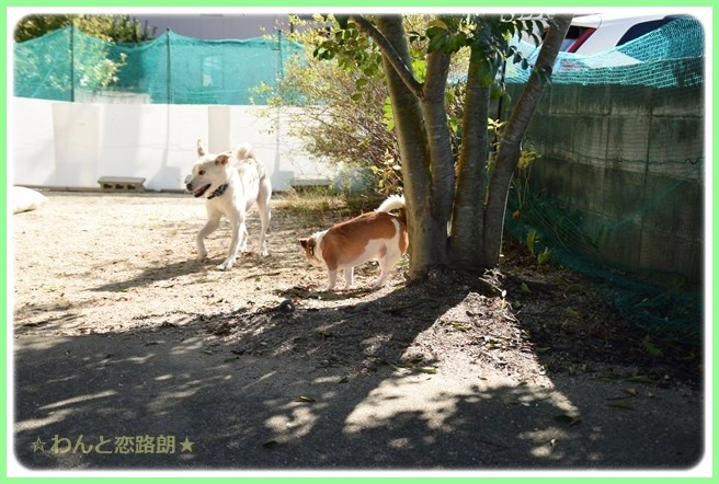 f:id:yasukazu01:20141010203303j:image