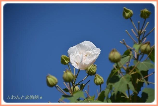 f:id:yasukazu01:20141015203806j:image