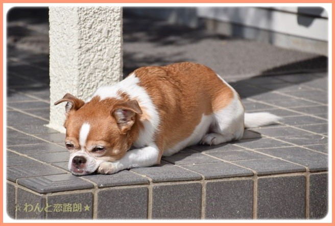 f:id:yasukazu01:20141015210214j:image
