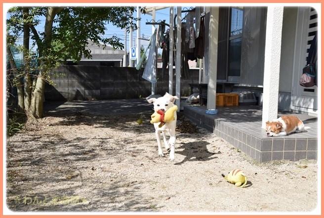 f:id:yasukazu01:20141015211014j:image