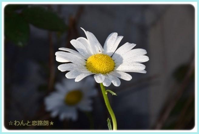 f:id:yasukazu01:20141019200835j:image