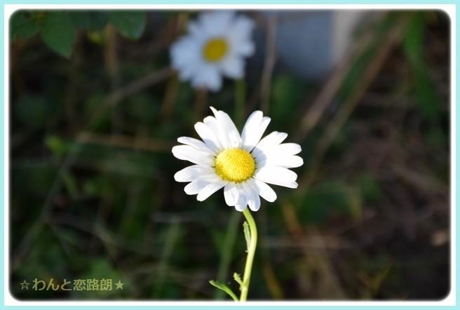 f:id:yasukazu01:20141019201422j:image