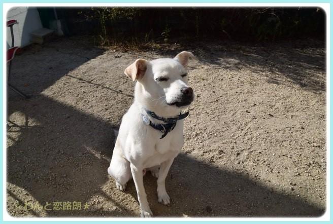 f:id:yasukazu01:20141020215835j:image