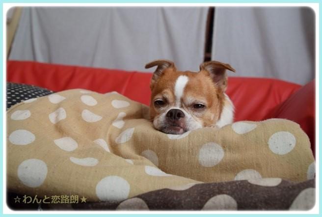 f:id:yasukazu01:20141021221850j:image