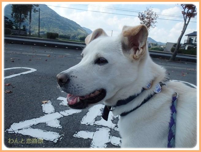 f:id:yasukazu01:20141026212615j:image