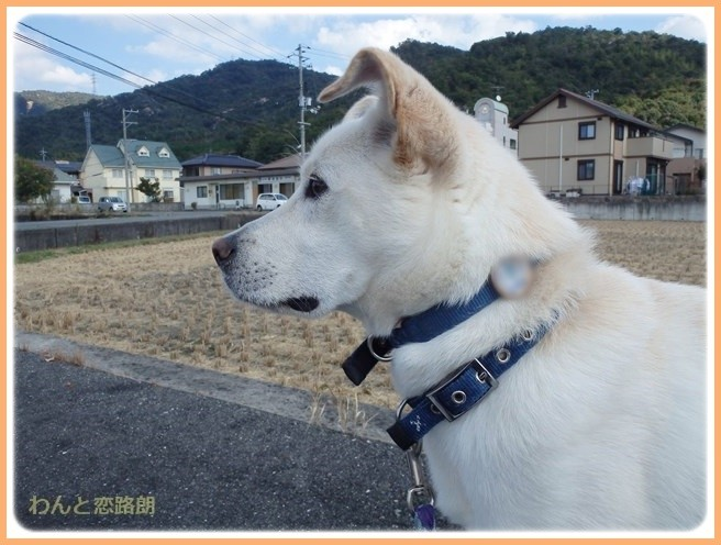 f:id:yasukazu01:20141026212847j:image
