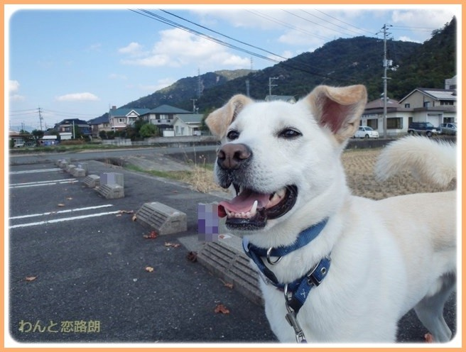 f:id:yasukazu01:20141026213151j:image