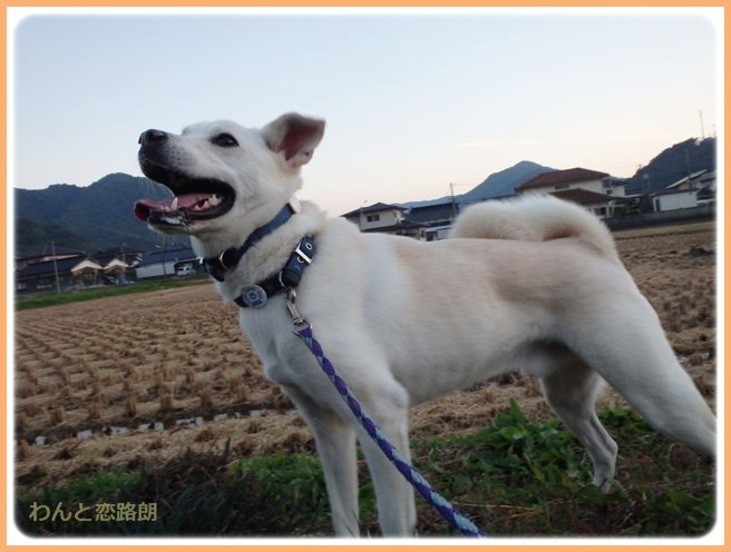 f:id:yasukazu01:20141026214019j:image