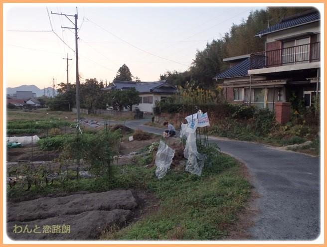 f:id:yasukazu01:20141026214128j:image