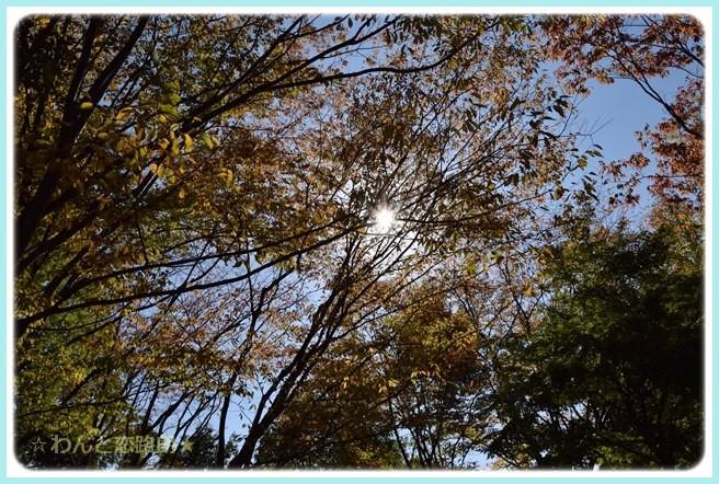 f:id:yasukazu01:20141028195712j:image