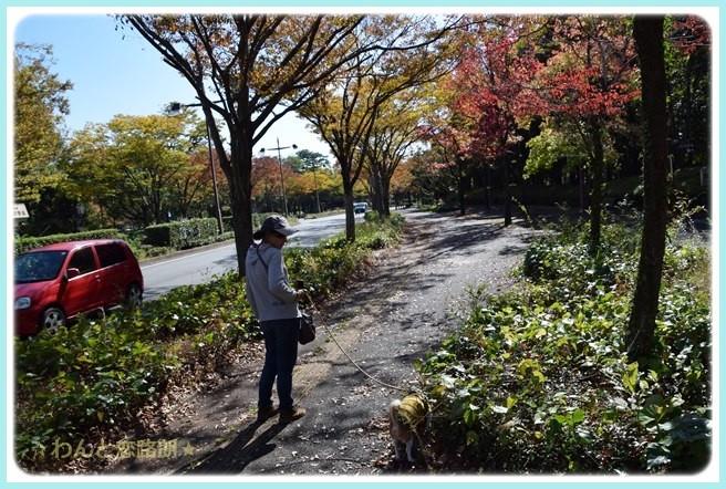 f:id:yasukazu01:20141029200324j:image