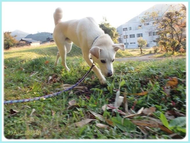 f:id:yasukazu01:20141031203655j:image