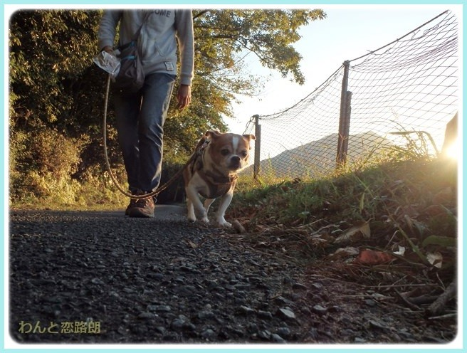 f:id:yasukazu01:20141031203840j:image