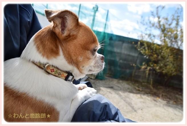 f:id:yasukazu01:20141103215611j:image