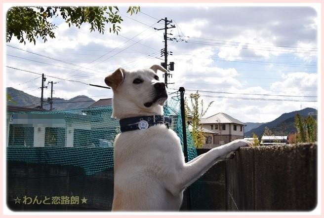 f:id:yasukazu01:20141103220054j:image